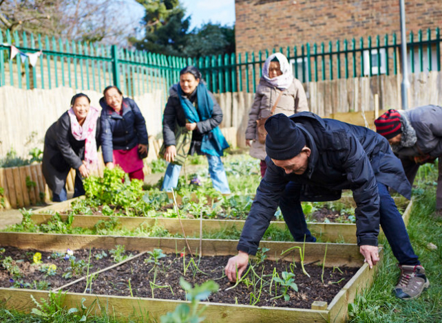Community group collecting vegetables in allotment